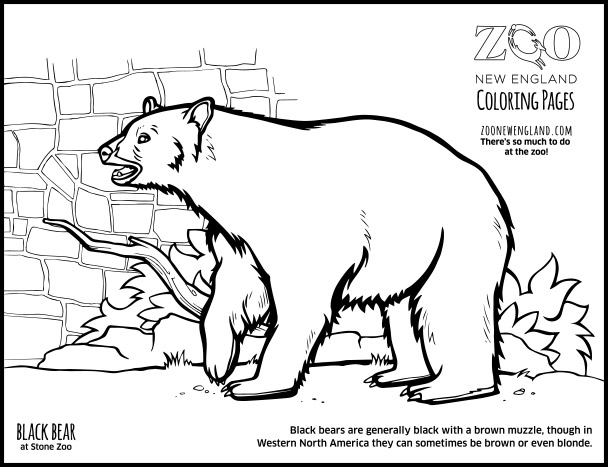 Coloring Pages Of A Black Bear.  Color a Bear
