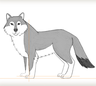 Wolf Drawing For Kids