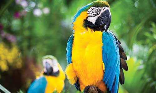 Blueyellowmacaw Gallery