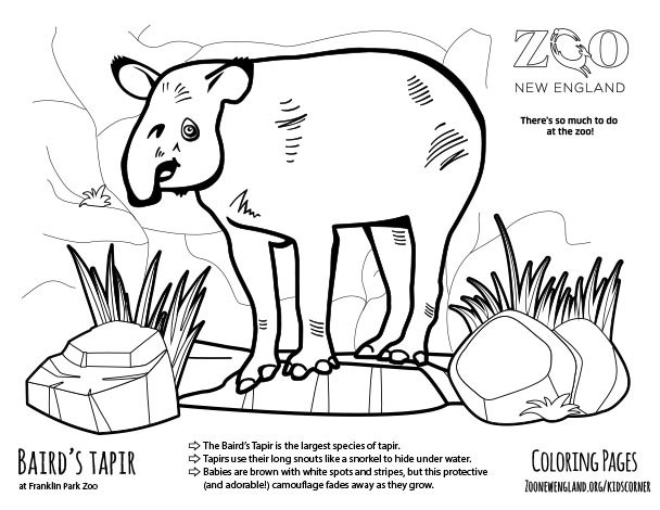 tapir coloring pages for kids - photo#11