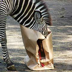 Zebra Bag Box