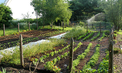 Organic Gardening Essentials | 9 Practices for Organic ... |Sustainable Gardening