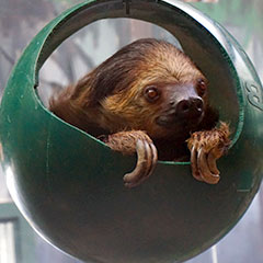 Slothball Box