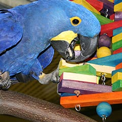 Macaw Animalcare