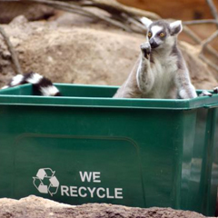Lemur Recycle