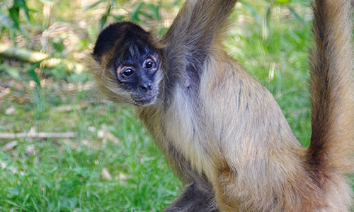 Spidermonkey Gallery