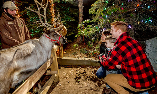ZooLights dazzles visitors of all ages each holiday season. Stroll along  tree-lined paths lit by thousands of twinkling lights. Visit black bears,  Smoky and ... - ZooLights Stone Zoo